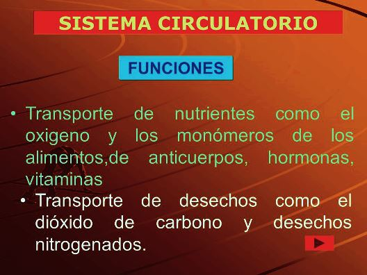 Sustancias que transporta el sistema circulatorio